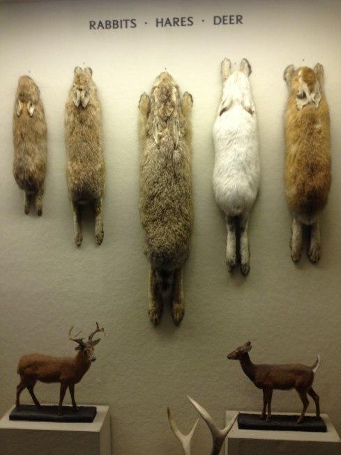 NY Mammals2
